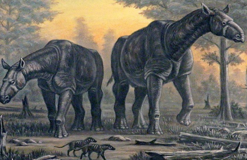 Óriásrinocérosz kövületet találtak