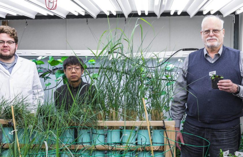 Génmódosított növényekkel tisztíthatnák meg a talajt