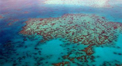 Veszélyeztetett besorolást kaphat a Nagy-korallzátony
