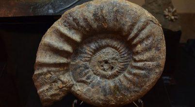 Miként úsztak az ősi fejlábúak?