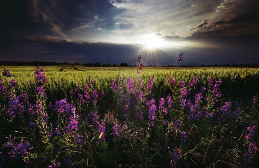 A nap képe: Fest a természet
