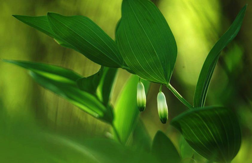 A nap képe: Apró erdei csoda