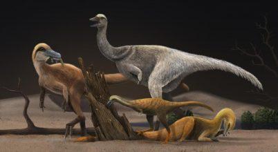 Miért váltak apróvá az alvarezszauruszok?