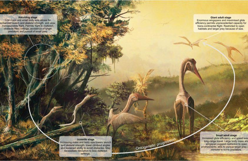 A pteroszauruszok már kikeléskor röpképesek lehettek