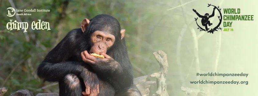 Csimpánzok világnapja