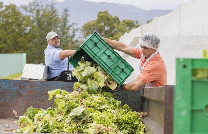 Egyre több mezőgazdasági termék kerül a szemétbe