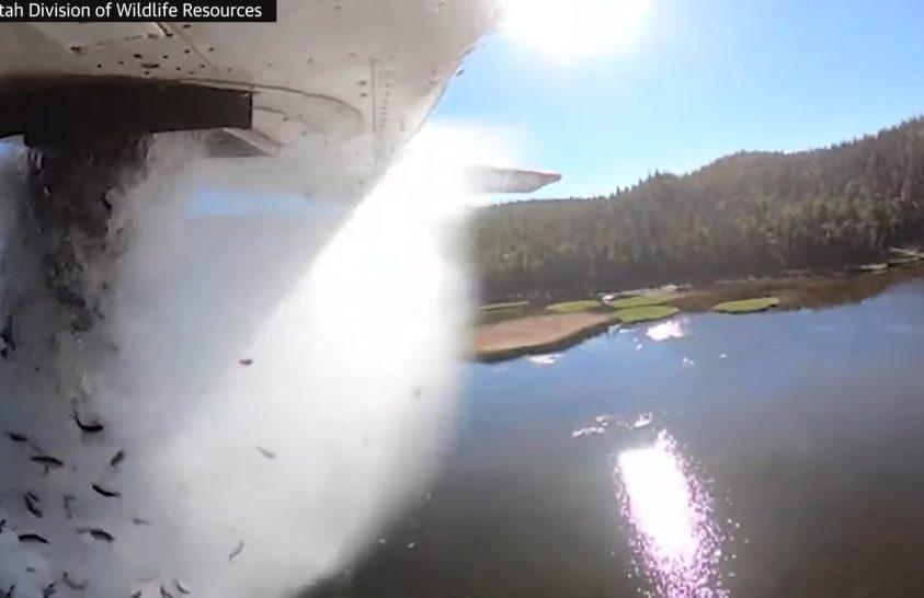 Repülőről szórják a halakat Utah állam tavaiba