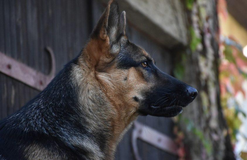 A kutyák felismerhetik, ha hazudunk