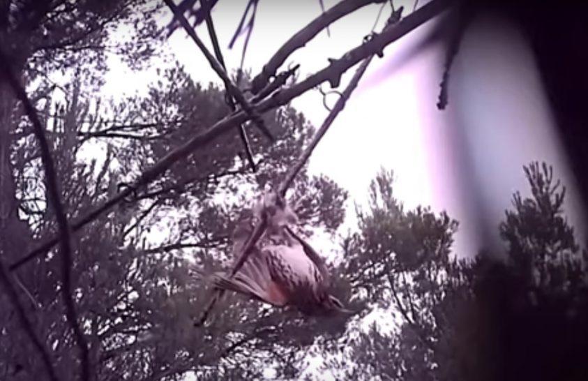 Betiltották a madarak lépvesszős vadászatát Franciaországban