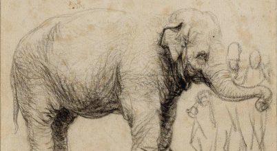 Rembrandt elefántja