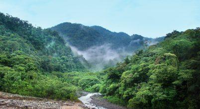 Miként befolyásolja Amazónia csapadékát a szén-dioxid szintje?