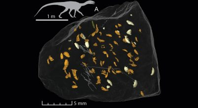 Hajdan élt apró élőlény került elő a dinoszaurusz-előd koprolitjából
