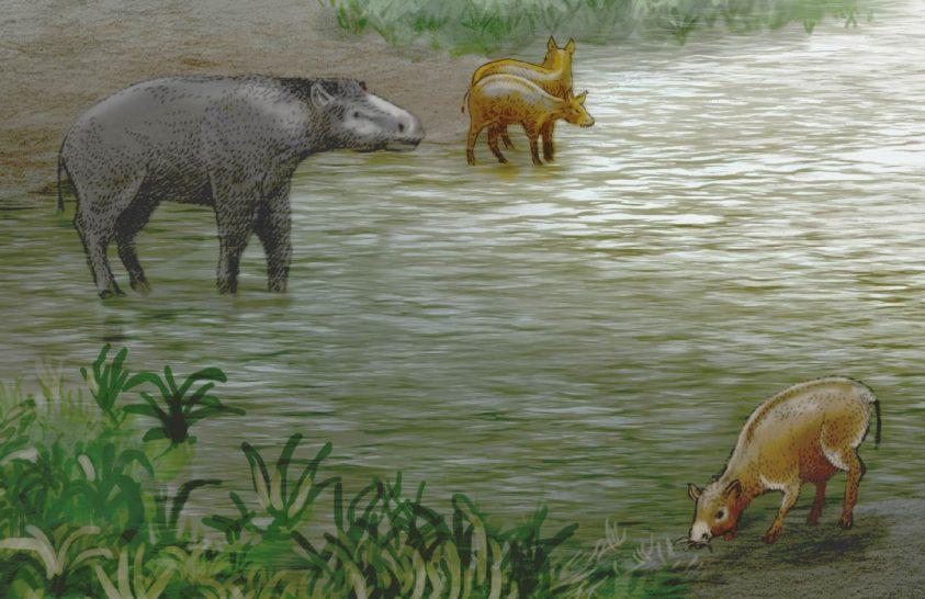 Ősi lófélék kövületeit azonosították Spanyolországban