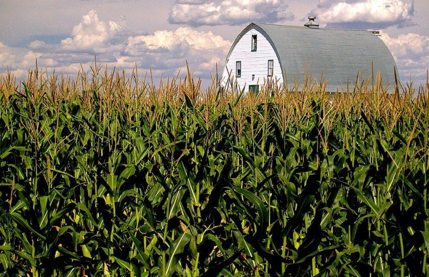 A tisztább levegő jelentősen növeli a mezőgazdasági termést