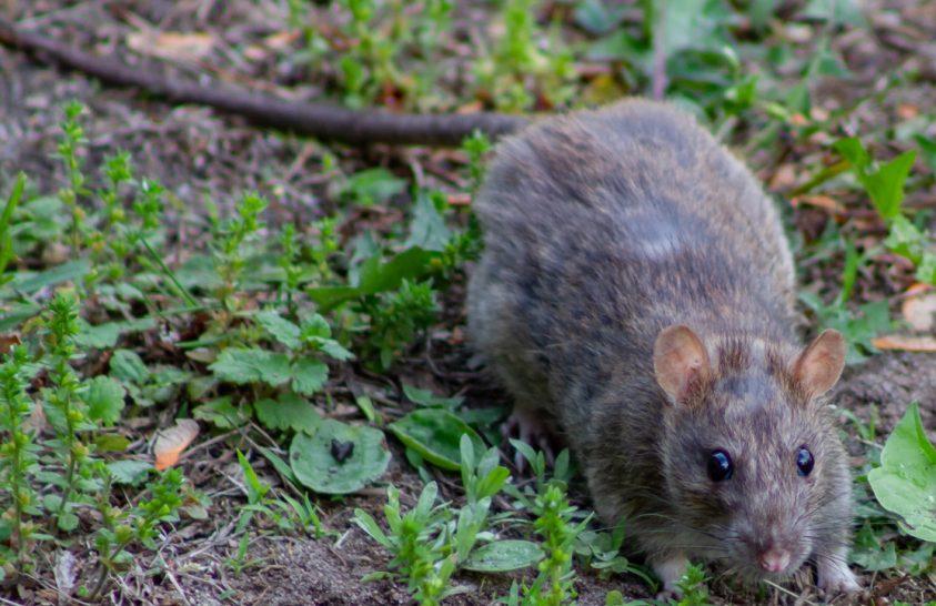60 év alatt 116 milliárd eurós kárt okoztak az idegen fajok