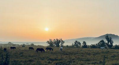Hajnali lovak
