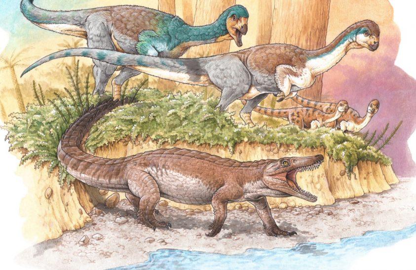 Apró krokodil kövületére bukkantak Chilében