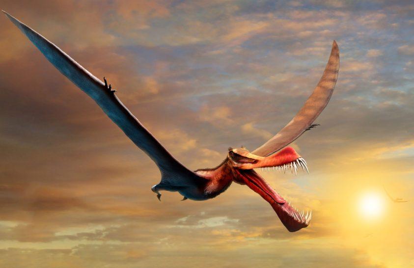 Hatalmas pteroszaurusz kövületét fedezték fel Ausztráliában