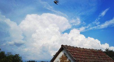 Miért látunk kevesebb madarat augusztusban?