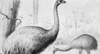 Több száz madárfajt pusztított ki az emberiség