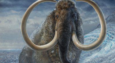 A gyaloglásban rekorder gyapjas mamut