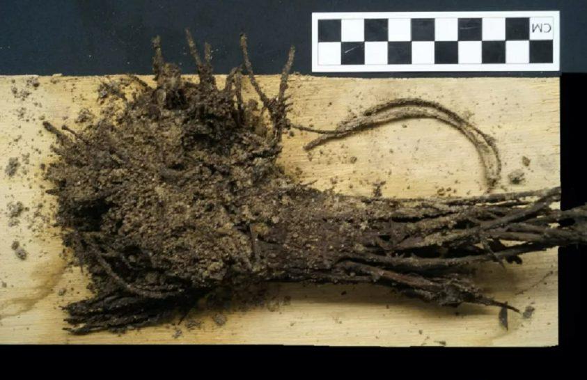 Kétezer éves virágcsokor került elő