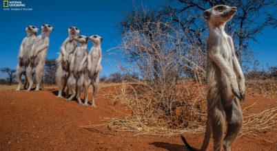 Túlélheti-e még a Kalahári?