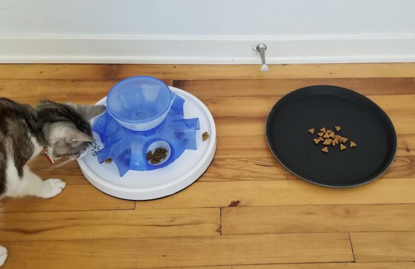 A macskák nem egyszerűen csak lusták