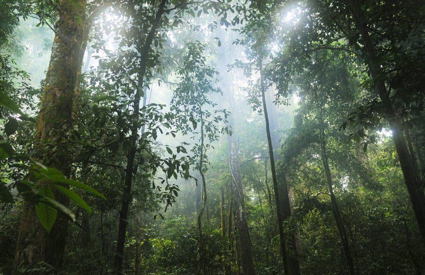 A kongói trópusi erdők maguk termelik esőjük egy részét