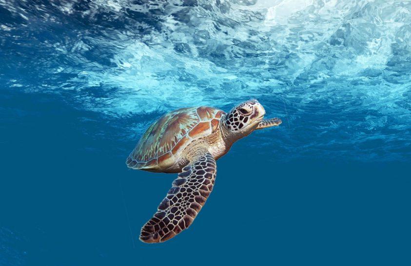 Rengeteg műanyagot esznek meg a tengeri teknősök