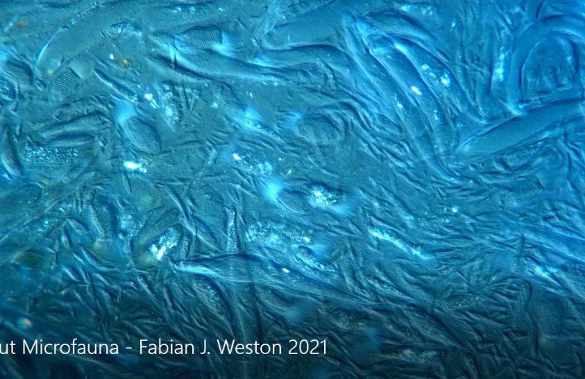 Lenyűgöző videókon tárulnak elénk a mikroszkopikus világok