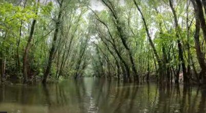 Fedezzük fel a leghosszabb, határainkon belül eredő és itt torkolló folyót