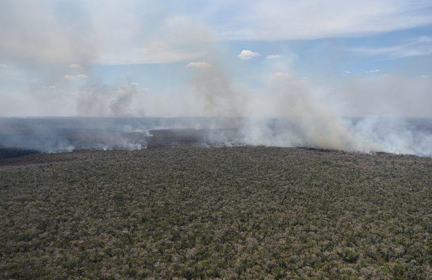 Amazónia szinte minden faját érinti az erdők pusztulása