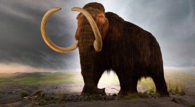 Visszatérhet-e, visszatérjen-e a mamut?
