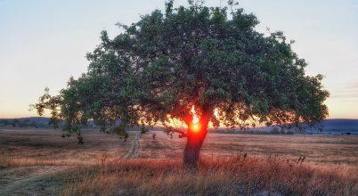 A nap képe: Vackor virradat után