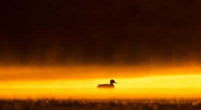 A nap képe: Hajnal