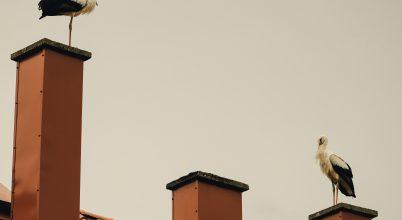 Szeptemberi gólyák
