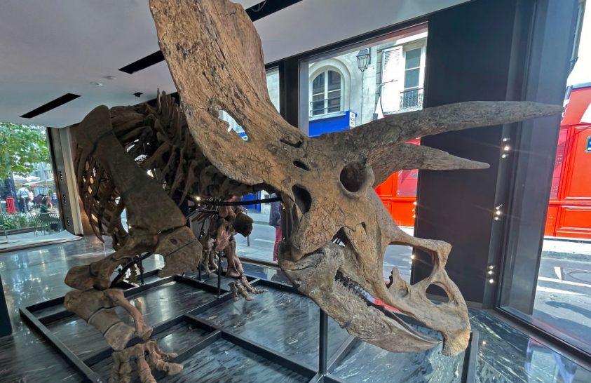 Eladó a világ egyik legnagyobb dinoszaurusza