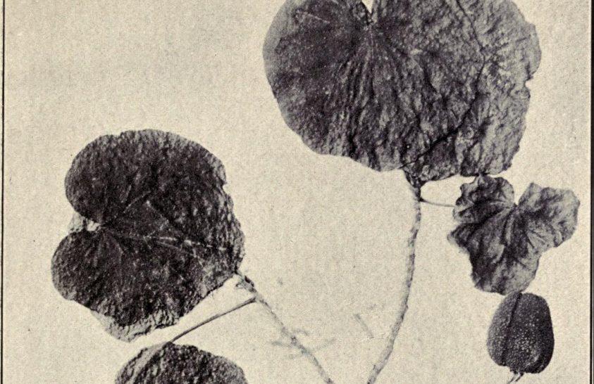 Kihalt virágok újraalkotott illata