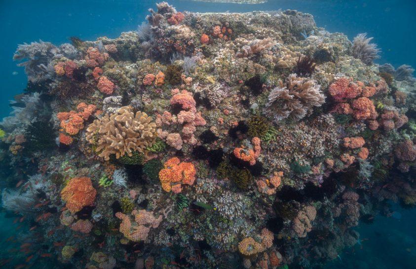 Különleges korallok a Fülöp-szigetek térségében