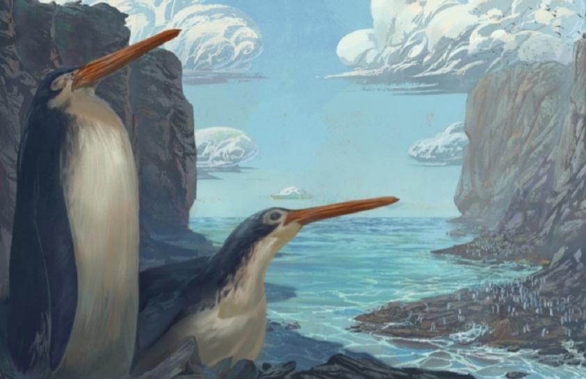 Iskolások fedeztek fel egy kihalt madárfajt