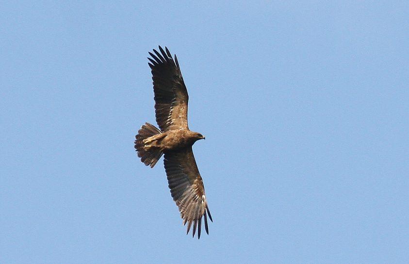 Egy kilométer magasan vonulnak a ragadozó madarak