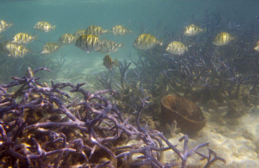 Felére csökkent a korallzátonyok területe az 1950-es évek óta