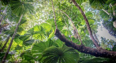 Visszakapják a világ legrégebbi esőerdejét az őslakosok