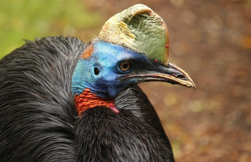 Hatalmas madarakat tenyészthettek a korai emberek