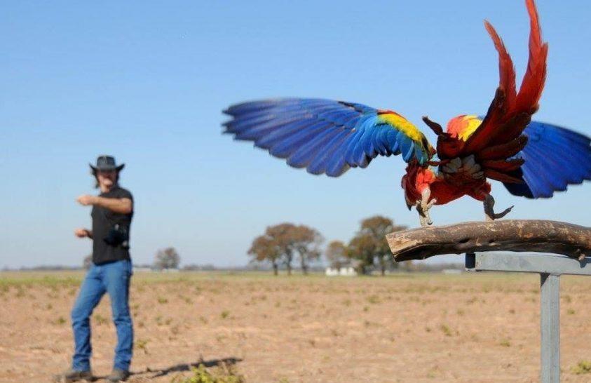 Tanítással segítik a papagájok visszatelepítését