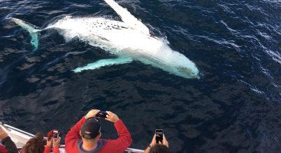 Stresszelik-e a bálnákat a turistahajók?