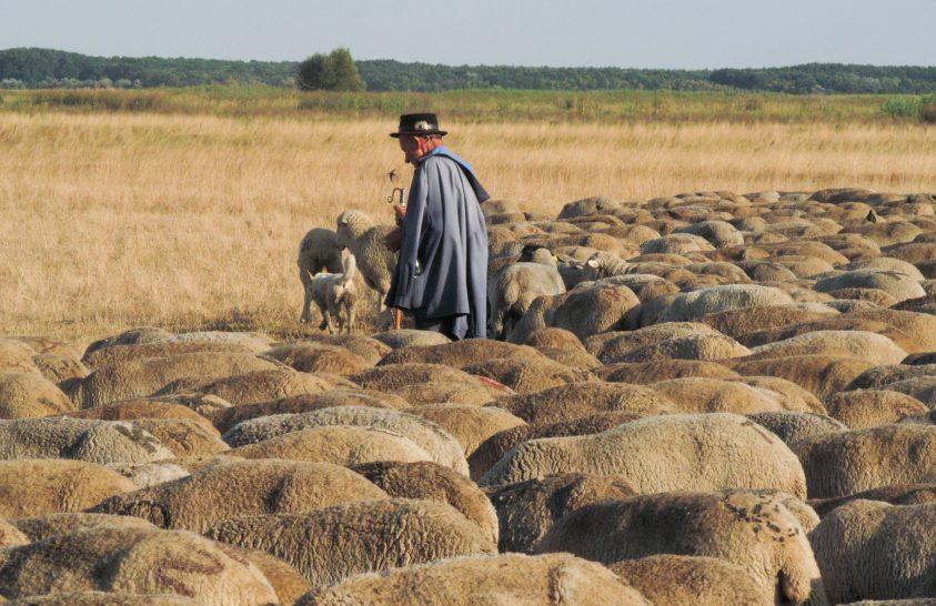 Hagyomány és modern tudás a legelők fenntarthatóságáért
