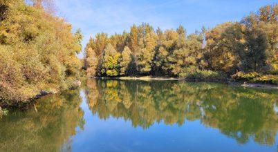 Kisvesszősi Duna-ág, Szigetköz