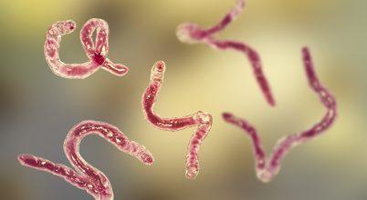 Magyar kutató vezetésével találtak új gyógymódot egy féregfertőzésre